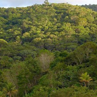 Rigenerazione forestale, in 20 anni è ricresciuta un'area grande come la Francia