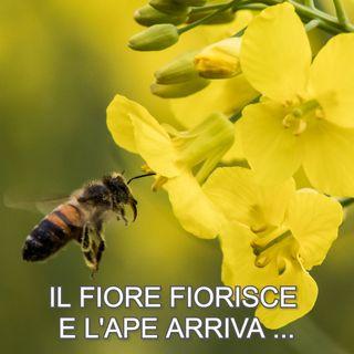 """""""Il fiore fiorisce e l'ape arriva""""   🎧🇮🇹"""