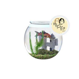 41: Plants, Pets and Preschoolers