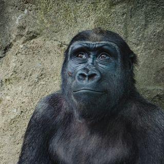 50 - Come mai l'essere umano riesce parlare e l'animale no? - Biologia e Linguaggio