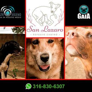 NUESTRO OXÍGENO Fundación canina San Lázaro - Carmenza Pinzón
