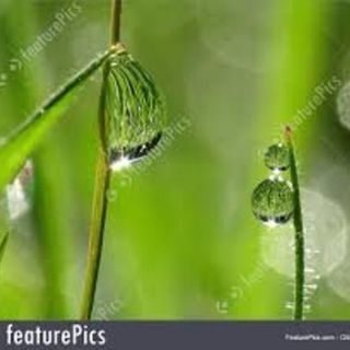 God Is Fresh Morning Dew To Us