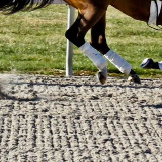 Mysterious racehorse injuries, and reforming the U.S. bail system