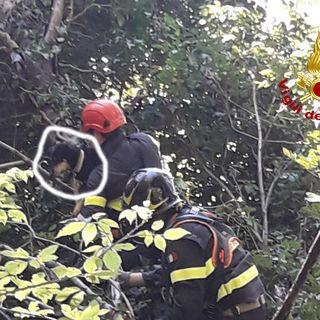 La cagnolina Mimì si avventura sulla pianta in bilico: salvata dai pompieri