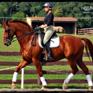 Improve Your Riding Through Movement