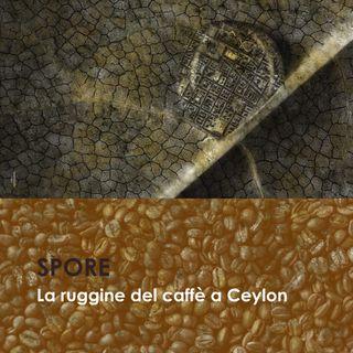 La ruggine del caffè a Ceylon