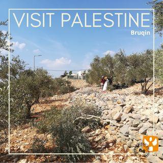 Visit Palestine: 07 Bruqin - Coordinamento e violenza dei coloni