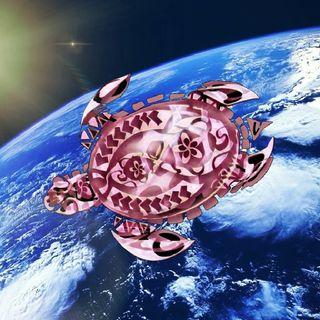 Pink Moon Turtle