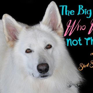 The Big Dog Who Was Not There