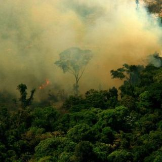 Il mese più buio dell'Amazzonia a maggio la deforestazione cresce del 67%