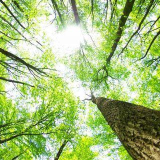 Riscopriamo la lentezza e il contatto con la natura