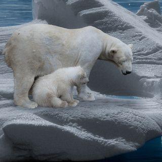 Filtraciones de los informes del IPCC #71