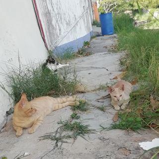 El caso de Nina Cat