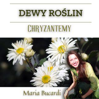 Dewy roślin - Magiczne Chryzantemy -  Światło na czas panowania Mroku - herbata z Maria Bucardi