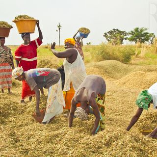 CALMIE AFRICAN DIARY SHOW- SENEGAL'S AGRICULTURAL SECTOR