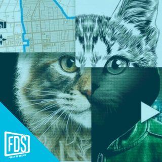 FDS Review: 'A los gatos ni tocarlos'