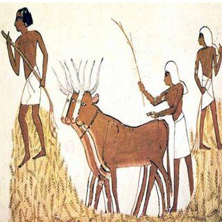 La dieta de los antiguos egipcios