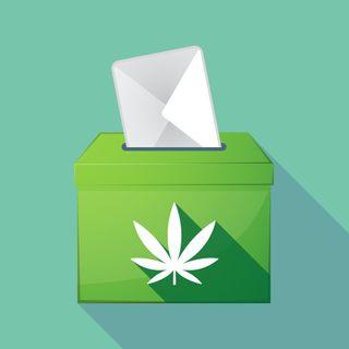Referendum Cannabis, servirà a qualcosa?