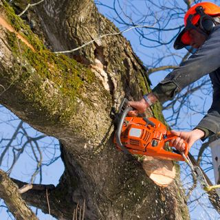 The Best tree removal service in Victoria