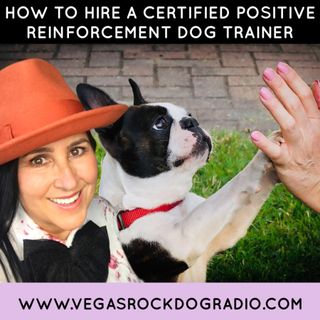 How To Hire A Certified Positive Reinforcement Dog Trainer