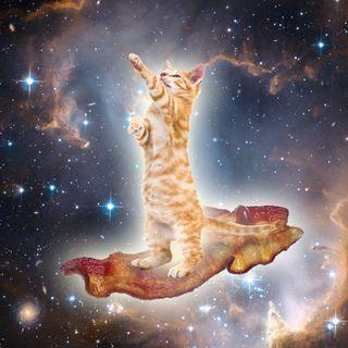 The Kitten Kong Show: Dangerous Bacon.
