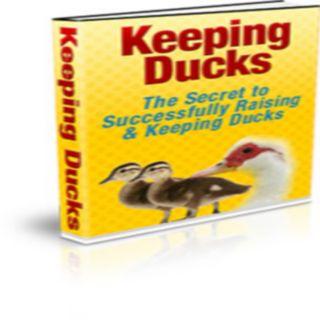 Keeping Ducks 1