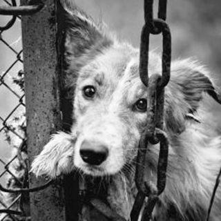 NUESTRO OXÍGENO Sensibilidad por los animales - Ximena Brion Delgado
