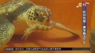 14:10 海洋生態悲歌 海龜誤食垃圾身亡 ( 2019-02-09 )