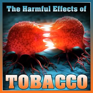 The Harmful Effects of Tobacco
