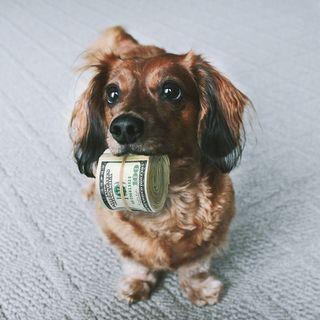 Ep.1 Quem está cuidando do seu dinheiro ?