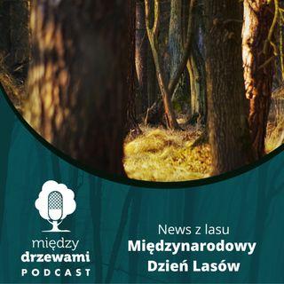 News z lasu - Międzynarodowy Dzień Lasów