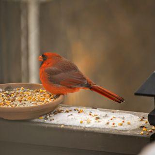 Cardinals (Part 2)