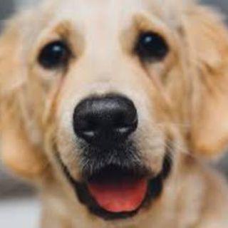 I Want My Dog Back