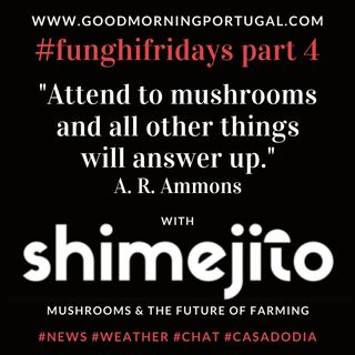 Portugal homesteading news, weather, #funghifriday & 'Casa do Dia'