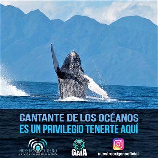 NUESTRO OXÍGENO Cantante de los océanos es un privilegio tenerte aquí - Dra. Isabel Cristina Ávila