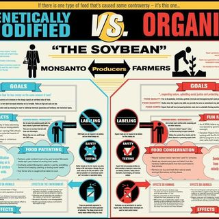 GMO VS NON-GMO VS ORGANIC Featuring 44 Grill Chef Amin