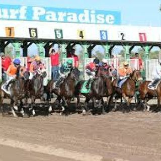 TURF PARADISE R10 SELECTIONS FOR 3/22
