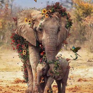 EP2 Elefante