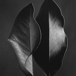 Episode 57: Ruth Bernhard: Female Form and Desire