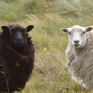 Episodio 45 - Shetland