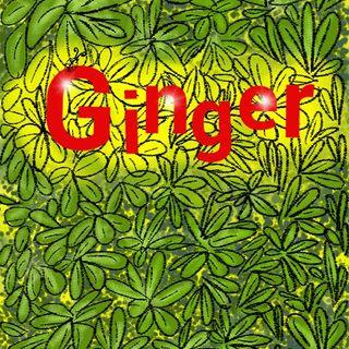 Ginger - Ediz Stargatto