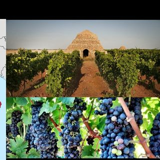 Ep 339: Puglia, Italy -- New World Wine From an Old World Country