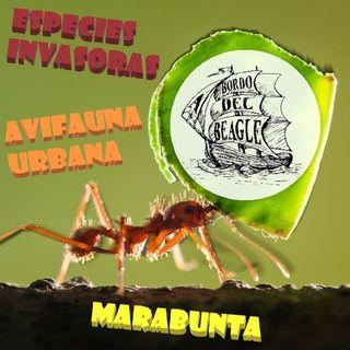 T1E03 Especies invasoras, Cuando ruge la marabunta y avifauna urbana con Fco. Javier García Gans