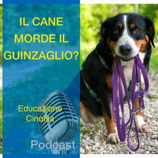 Il Cane Morde il GUINZAGLIO?