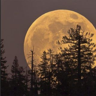 """SAFS-0049 - 2021.08.23 - """"By The Light of the Sturgeon Moon...."""""""