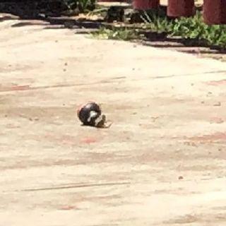 Bomba de Humo en casilla de Naucalpan
