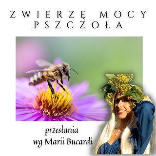 Zwierzę Mocy - Pszczoła - pracowitość, odpowiedzialność, dyscyplina | Maria Bucardi