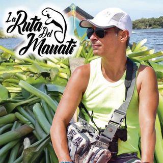La Ruta del Manatí