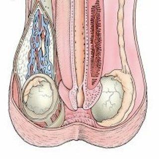 L'orgasme Masculin IV