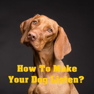How To Make Your Dog Do What You Want?